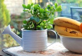 Plant in a tea pot next to a fruit bowl on a table